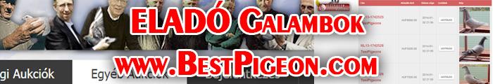 www.bestpigeon.com