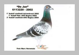 BE-10-6146231_2_Tasipigeons