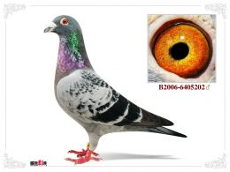 BE-10-6146231_3_Tasipigeons
