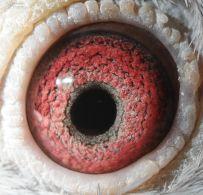 BE04-3204833-eye