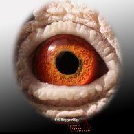BE05-3006633-eye