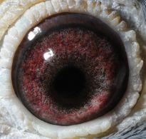 BE06-3066917-eye