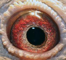 NL07-1500780-eye