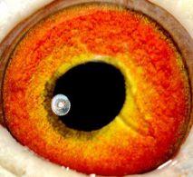 NL08-1424656-eye