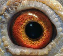 NL08-2102422-eye