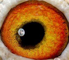 NL09-1076753-eye