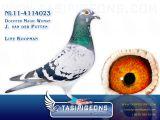 NL11-4114023_gal